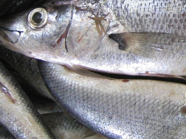 burundi fish 2